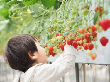 果物で体内環境を整えよう!
